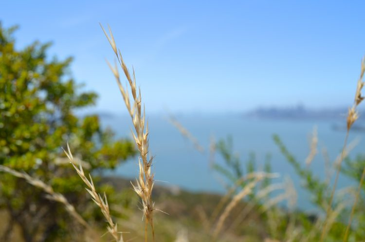 Falling in love with Angel Island