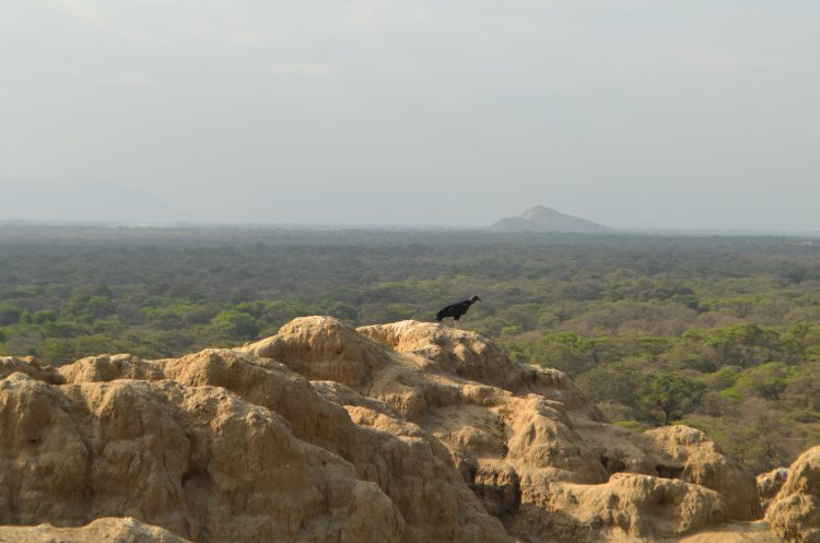 Birds, Trees and Independent Nature of Pomac Sanctuary